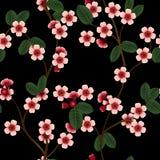 Безшовная картина с розовыми цветками и лист вишни Стоковые Фотографии RF