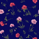 Безшовная картина с розовым и красным маком цветет в ботаническом st Стоковое Фото