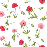 Безшовная картина с розовым и красным маком цветет Стоковая Фотография RF