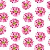Безшовная картина с розовым цветком на белой предпосылке Нарисованная рукой иллюстрация акварели бесплатная иллюстрация