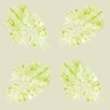 Безшовная картина с салатом Стоковое фото RF