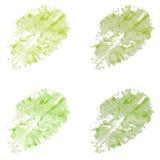 Безшовная картина с салатом Стоковая Фотография RF