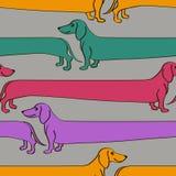 Безшовная картина с собаками таксы шаржа Стоковое Изображение