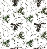 Безшовная картина с сосной разветвляет, предпосылка вектора с иглами Текстура графика природы Стоковые Фотографии RF
