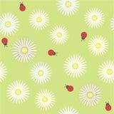 Безшовная картина с стоцветами и ladybirds на зеленом поле иллюстрация штока