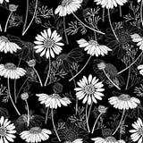 Безшовная картина с стоцветами на черной предпосылке han иллюстрация штока