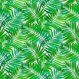Безшовная картина с тропическими листьями ладони иллюстрация штока