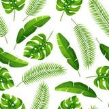 Безшовная картина с тропическими листьями ладони Экзотические тропические заводы Иллюстрация природы джунглей Стоковые Фотографии RF