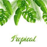Безшовная картина с тропическими листьями ладони Экзотические тропические заводы Иллюстрация природы джунглей Стоковая Фотография