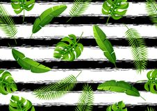 Безшовная картина с тропическими листьями ладони Экзотические тропические заводы Иллюстрация природы джунглей Стоковые Изображения