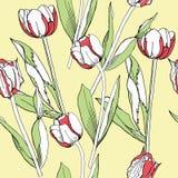 Безшовная картина с тюльпанами Стоковое фото RF