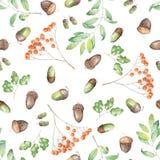 Безшовная картина с флористическим орнаментом элементов леса акварели (жолудей, рябины и ветвей дуба) иллюстрация вектора