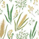 Безшовная картина с хлопьями Ячмень, пшеница, рожь, рис и овес иллюстрация вектора