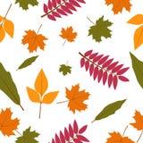 Безшовная картина с цветастыми листьями осени вектор Стоковая Фотография RF