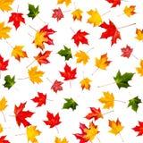 Безшовная картина с цветастыми листьями осени Абстрактный упадите назад Стоковая Фотография