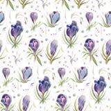 Безшовная картина с цветками акварели весны Стоковое Изображение RF
