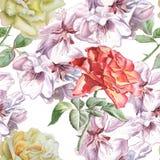 Безшовная картина с цветками акварели стоковое изображение