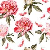 Безшовная картина с цветками акварели peonies Стоковая Фотография RF