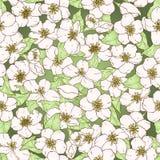 Безшовная картина с цветками вишневого цвета. Стоковое Изображение RF