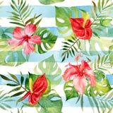 Безшовная картина с цветками и листьями акварели тропическими дальше Стоковое Изображение RF