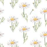 Безшовная картина с цветками и листьями стоцвета Стоковое Изображение