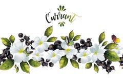 Безшовная картина с цветками и смородиной Стоковые Изображения RF