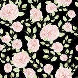 Безшовная картина с цветками роз акварели Стоковые Фотографии RF