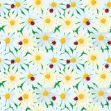 Безшовная картина с цветками стоцвета и ladybirds, ба лета иллюстрация вектора