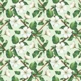 Безшовная картина с цветками яблока акварели Стоковое Изображение RF