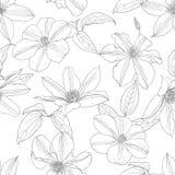 Безшовная картина с цветками clematis Стоковые Фотографии RF