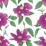 Безшовная картина с цветками clematis Стоковая Фотография