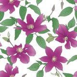 Безшовная картина с цветками clematis Стоковое фото RF