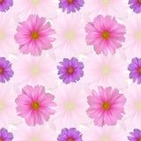 Безшовная картина с цветком космоса Стоковое Изображение