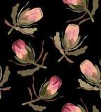 Безшовная картина с цветком protea иллюстрация штока