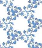 Безшовная картина с цикорием Круглый калейдоскоп цветков и флористических элементов Стоковое Изображение RF