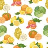 Безшовная картина с цитрусовыми фруктами на белой предпосылке Стоковое Изображение