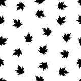 Безшовная картина с черными кленовыми листами на белой предпосылке Стоковые Изображения