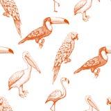 Безшовная картина с экзотическими птицами иллюстрация вектора
