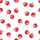 Безшовная картина с ягодами падуба Стоковая Фотография RF