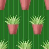 Безшовная картина с succulent Стоковое Изображение