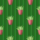Безшовная картина с succulent Стоковое Изображение RF