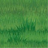Безшовная картина - текстура травы Стоковая Фотография