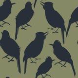 Безшовная картина темных силуэтов тропической птицы на зеленой предпосылке Стоковое фото RF