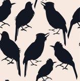 Безшовная картина темных силуэтов тропической птицы на свете - розовой предпосылки Стоковое фото RF