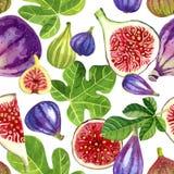 Безшовная картина фиолетовых и зеленых смокв и листьев покрасила острословие Стоковые Фотографии RF