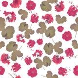 Безшовная картина цветков гераниума Стоковые Изображения