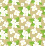 Безшовная картина цветков жасмина иллюстрация вектора