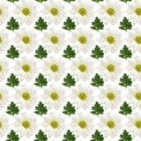 Безшовная картина цветков и листьев Стоковая Фотография RF
