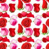 Безшовная картина цветков роз Стоковая Фотография