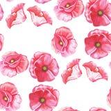 Безшовная картина цветков тюльпанов Стоковые Фотографии RF